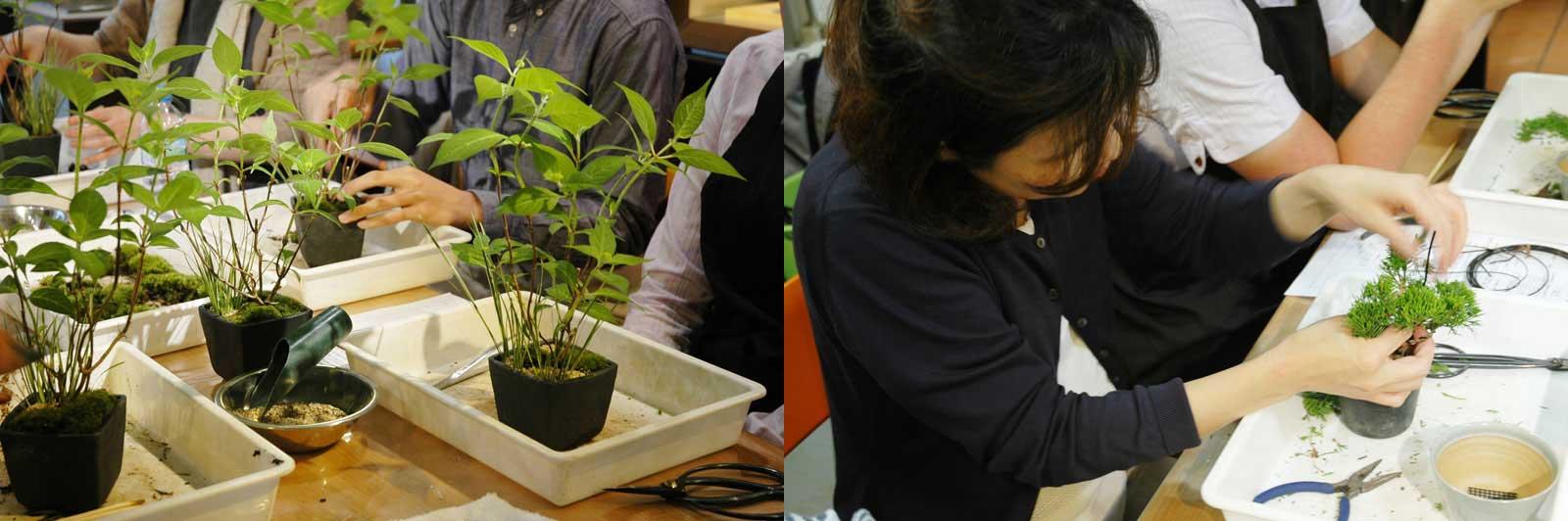 中目黒の盆栽教室