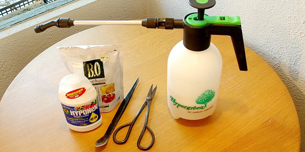 盆栽・苔玉の管理方法 | グリーンスケープ中目黒の盆栽店