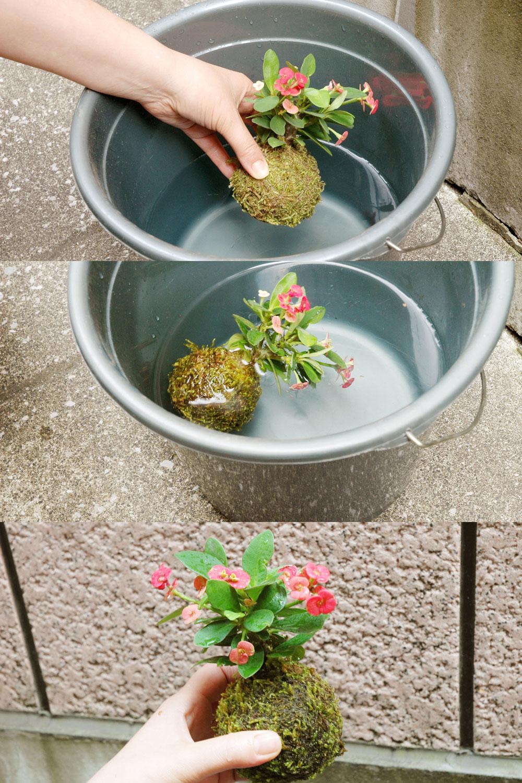 苔玉の水やりについて | グリーンスケープ中目黒の盆栽店